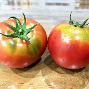 朝採れ新鮮トマト